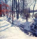 1964 Bainbridge Woods in the winter